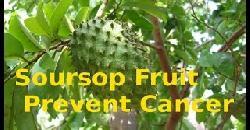 Health Benefits Of Soursop Fruit
