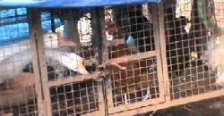 വാത്തയെ ചെലവ് കുറഞ്ഞ രീതിയിൽ വളർത്താം Goose Kerala Far