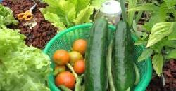 അക്വാപോനിക്സ് കൃഷി രീതി Aquaponics Organic Farming