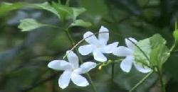Herbs and plants | Nandyar Vattam | Nambyar Vattam