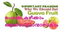 പേരക്ക കഴിക്കാം ആരോഗ്യവാന്മാരാകാം Health Benefits of Guava