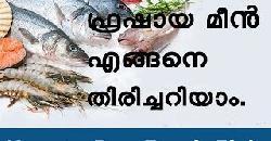 ഫ്രഷായ മീൻ എങ്ങനെ തിരിച്ചറിയാം How to Buy Fresh Fish