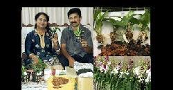 ഞാനും എന്റെ ഓർക്കിഡ് ചെടികളും Dendrobium Orchid Plant Care