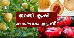 ജാതി കൃഷിയിലൂടെ വരുമാനം നേടാം Jathi Krishi Nutmeg Cultivation Tips